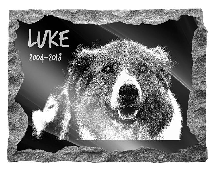 Border Collie Dog Memorial. Image and inscription etched on polished black granite with a natural outer edge chisel finish. Plaque size: 20
