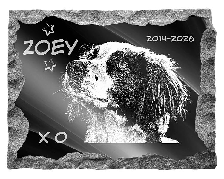 Brittany Spaniel Dog Memorial. Image and inscription etched on polished black granite with a natural outer edge chisel finish. Plaque size: 22
