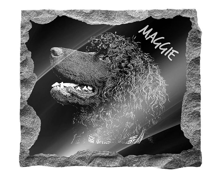 Irish Water Spaniel Dog Memorial. Image and inscription etched on polished black granite with a natural outer edge chisel finish. Plaque size: 16