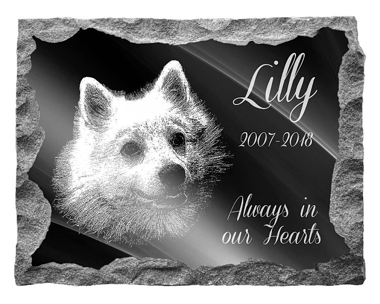 Japanese Spitz Dog Memorial. Image and inscription etched on polished black granite with a natural outer edge chisel finish. Plaque size: 20