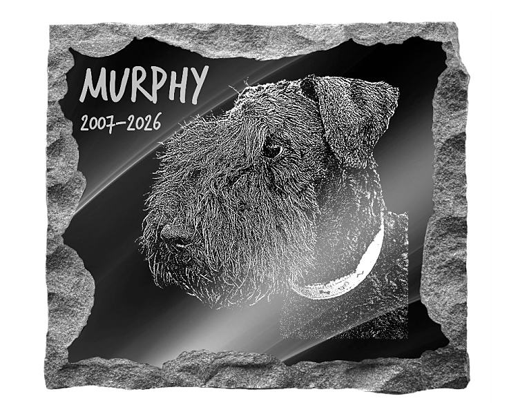 Kerry Blue Terrier Dog Memorial. Image and inscription etched on polished black granite with a natural outer edge chisel finish. Plaque size: 16